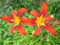 Awareness of God: A flower in the Yankton Benedictines Garden shows